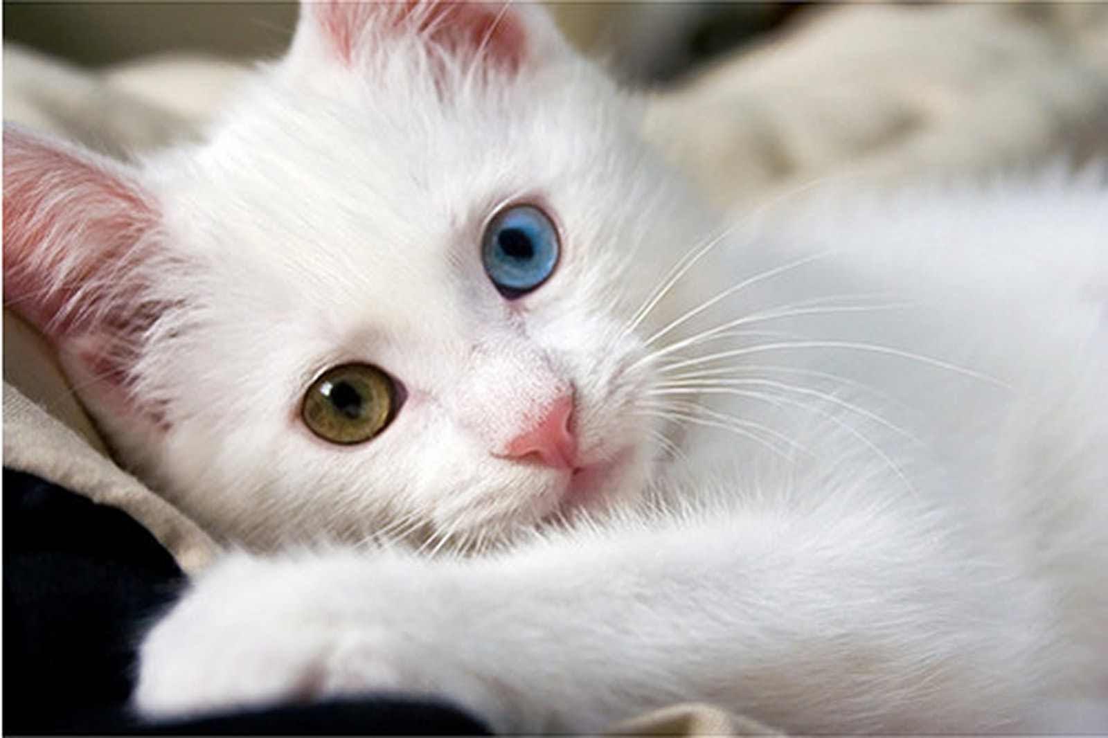 بالصور اجمل صور قطط , شاهد بالصور ارق انواع القطط 1867 7