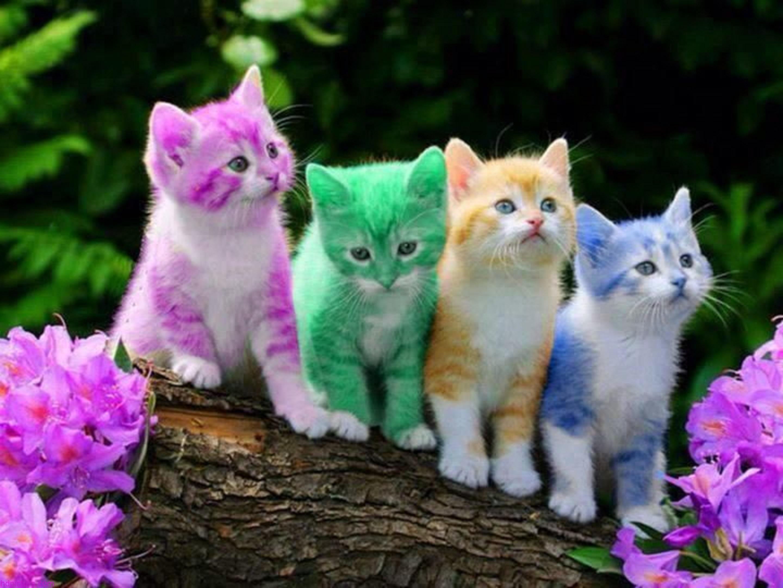 بالصور اجمل صور قطط , شاهد بالصور ارق انواع القطط 1867 8