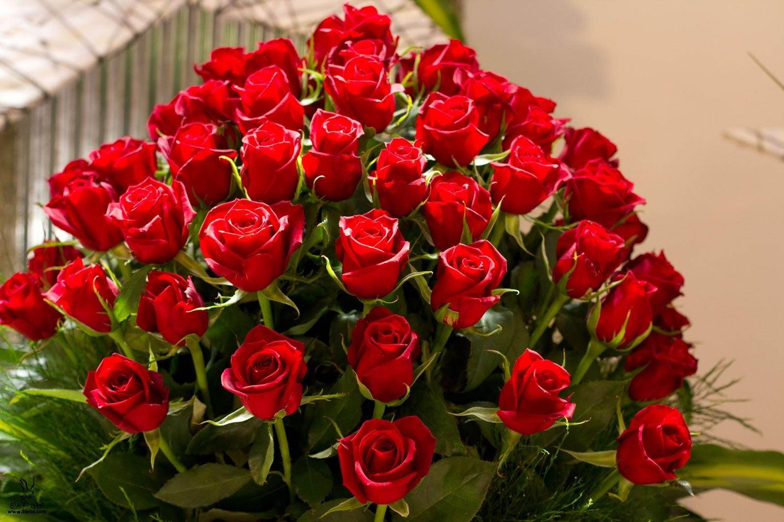 صورة صور ورد طبيعي , شاهد الرقة الشعرية التى توجد فى الورود