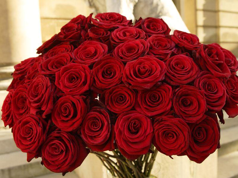 بالصور صور ورد طبيعي , شاهد الرقة الشعرية التى توجد فى الورود 1916 10