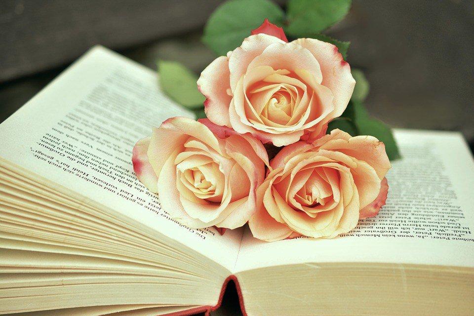بالصور صور ورد طبيعي , شاهد الرقة الشعرية التى توجد فى الورود 1916 11