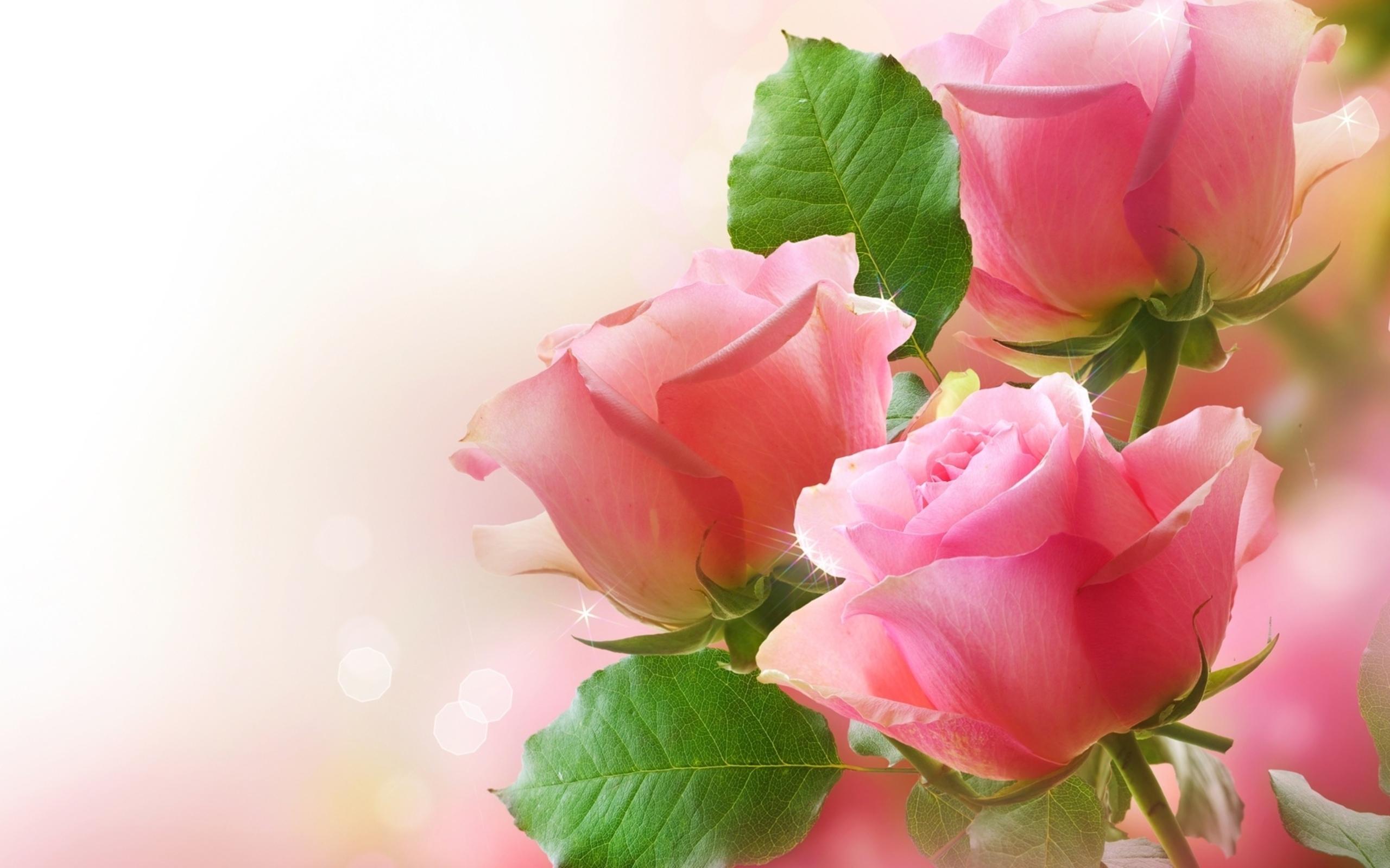بالصور صور ورد طبيعي , شاهد الرقة الشعرية التى توجد فى الورود 1916 4