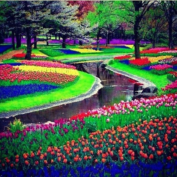 بالصور صور ازهار , اجمل الصور من معارض الزهور حول العالم unnamed file 56