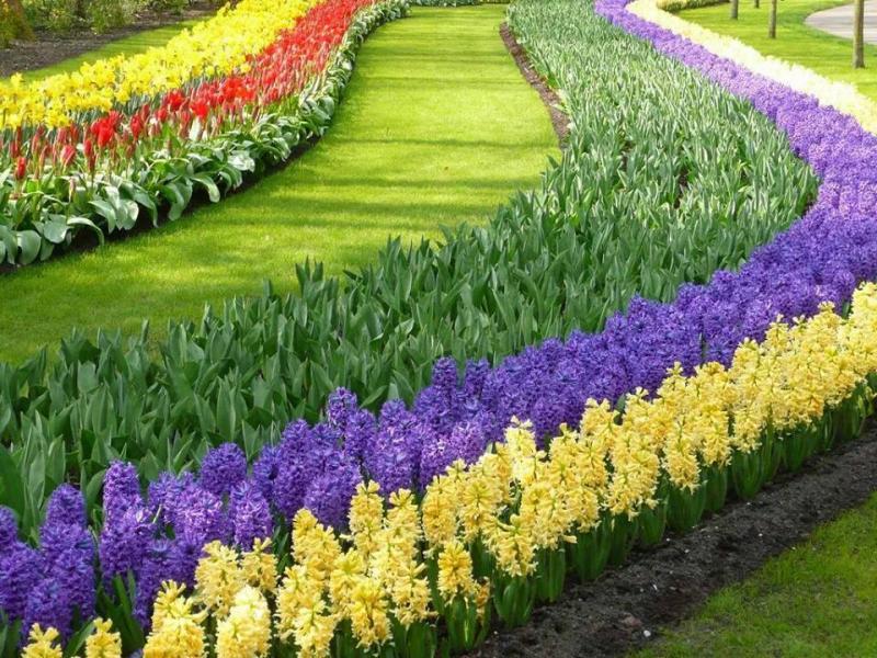 بالصور صور ازهار , اجمل الصور من معارض الزهور حول العالم unnamed file 59