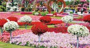 صور ازهار , اجمل الصور من معارض الزهور حول العالم
