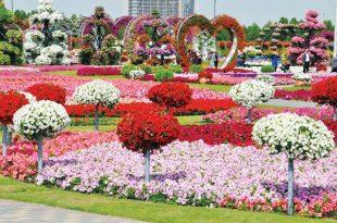 صوره صور ازهار , اجمل الصور من معارض الزهور حول العالم