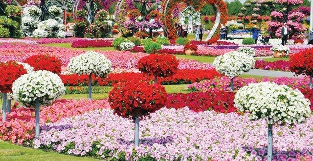 صور صور ازهار , اجمل الصور من معارض الزهور حول العالم