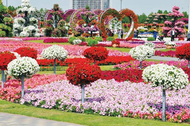 صورة صور ازهار , اجمل الصور من معارض الزهور حول العالم