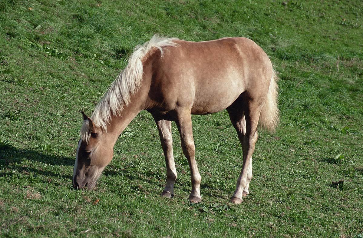 بالصور صور حيوانات المزرعة , اروع الصور المختلفه للحيوانات 10509 10