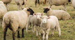 صور حيوانات المزرعة , اروع الصور المختلفه للحيوانات
