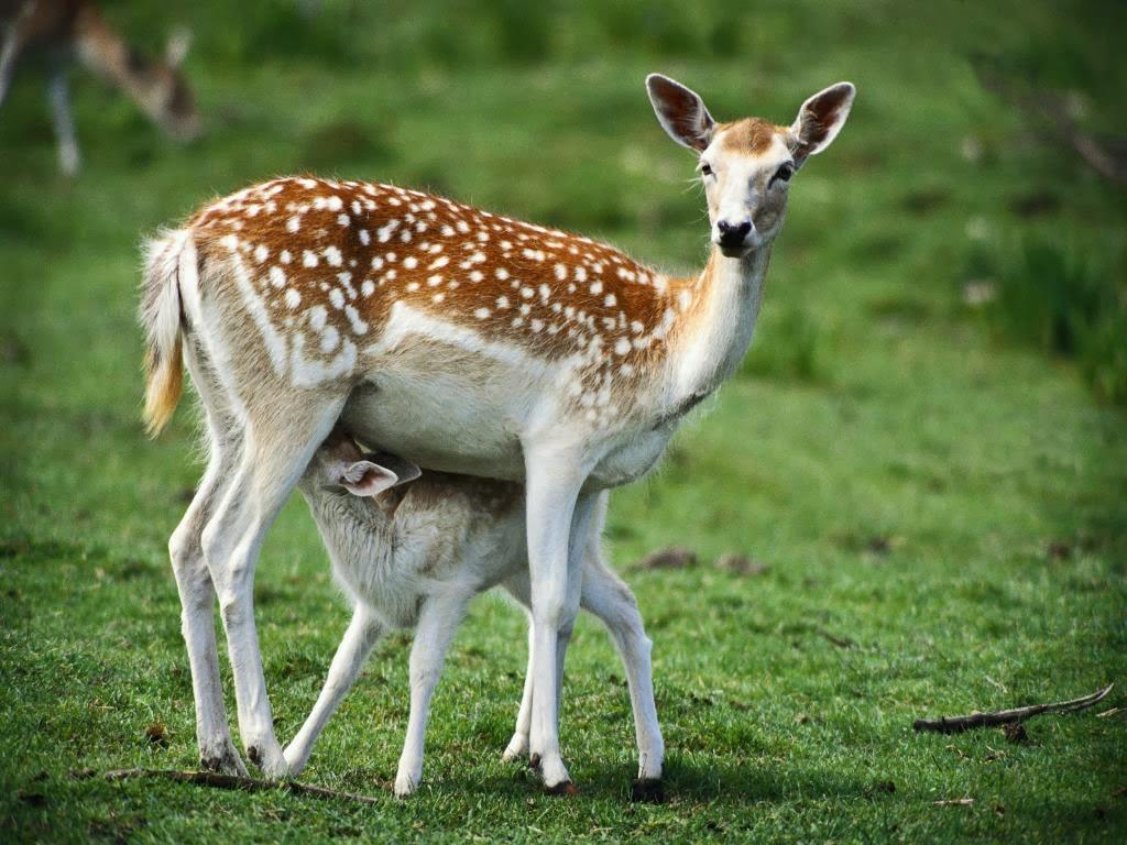 بالصور صور حيوانات المزرعة , اروع الصور المختلفه للحيوانات 10509 2