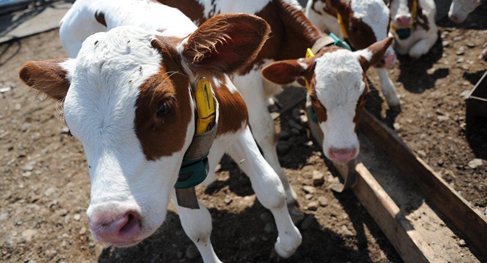 بالصور صور حيوانات المزرعة , اروع الصور المختلفه للحيوانات 10509 6
