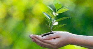 صورة ما مقترحاتك للوصول الى بيئة نظيفة , كيفيه المحافظه علي البيئه