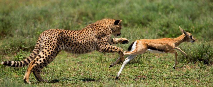 صور بحث عن الحيوانات المفترسة , كتابة مقالية عن الحيوانات الشرسة
