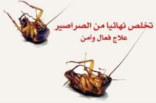صورة التخلص من الصراصير بالخل , ايه دا بجد حل سريع للقضاء على الصراصير