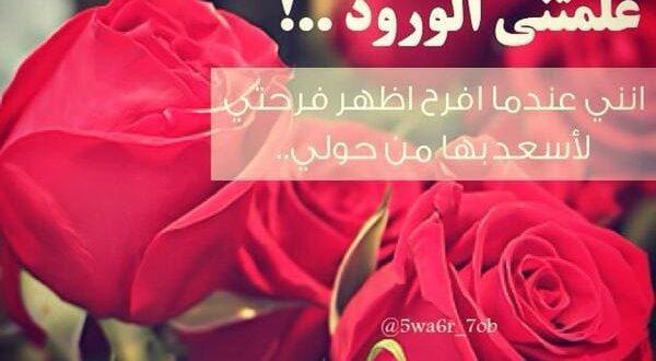 صورة حكم عن الورد , اقوال جميلة اوي عن الورد العطري
