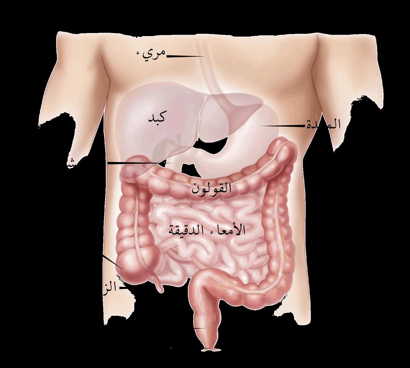 صور الزائدة الدودية , اعراض تظهر عند اصابتك بالزايدة الدودية