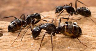 معلومات عن النمل , حاجات كتير متعرفيهاش عن حشرات النمل
