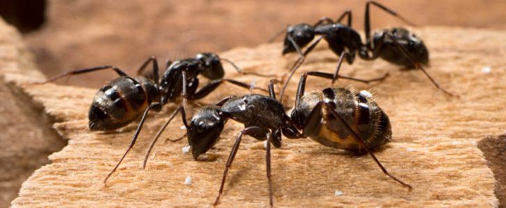 صور معلومات عن النمل , حاجات كتير متعرفيهاش عن حشرات النمل