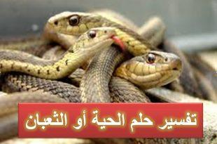 صورة الافعي في المنام , تفسير رؤيه الثعابين في الحلم