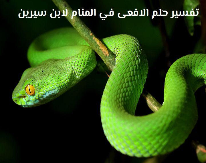 صور الافعي في المنام , تفسير رؤيه الثعابين في الحلم