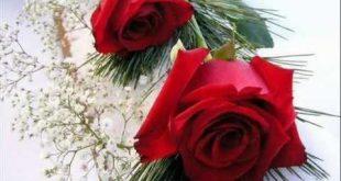 ورود رومانسية , صور ورد للحبيب