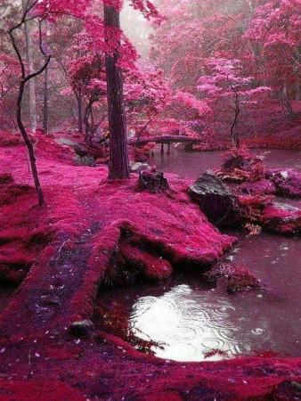 صورة خلفيات طبيعية hd , صور مناظر طبيعيه عاليه الجوده