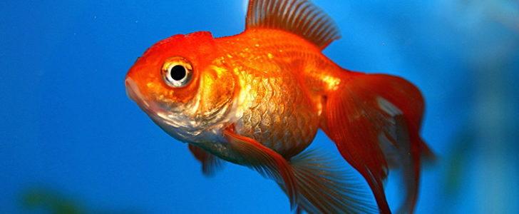صورة معلومات عن الاسماك , بحث عن الاسماك و انواعها