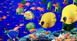 معلومات عن الاسماك , بحث عن الاسماك و انواعها