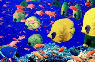 صور معلومات عن الاسماك , بحث عن الاسماك و انواعها