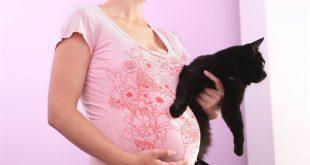 علاج جرثومة القطط قبل الحمل , طرق علاج الجرثومه القطط والوقايه منها