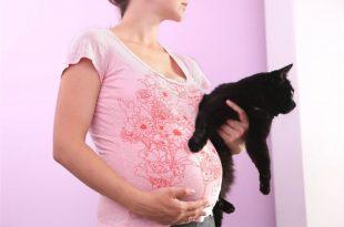 صور علاج جرثومة القطط قبل الحمل , طرق علاج الجرثومه القطط والوقايه منها