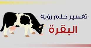 تفسير حلم بقرة , رؤيه البقره في المنام لابن شاهين