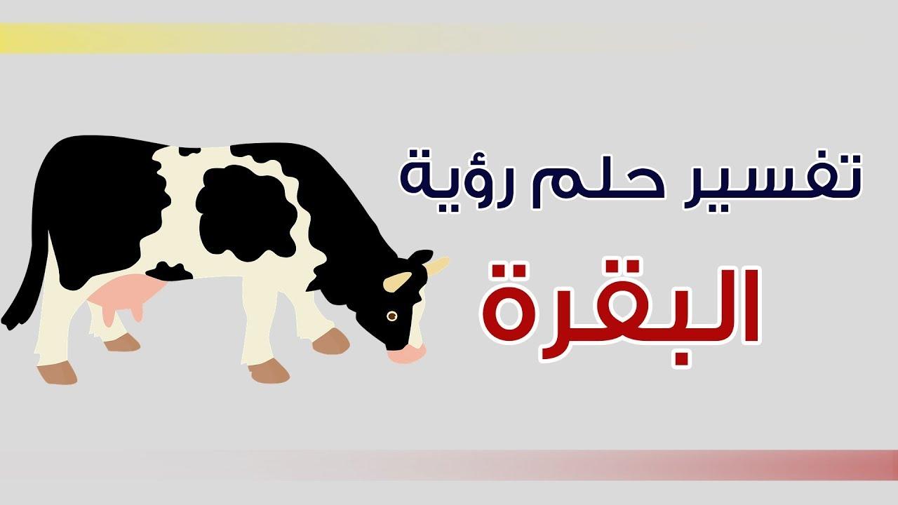 صورة تفسير حلم بقرة , رؤيه البقره في المنام لابن شاهين