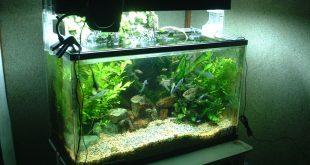 ديكورات احواض سمك , اجمل واشيك ديكورات السمك الزينة