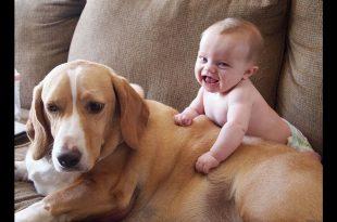صورة الضحك مع الاطفال , كيفية جلب مشاعر الطفال