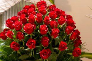 صورة اجمل وردة حمراء في العالم , رمز الحب والجمال يكمن في زهرة حمراء