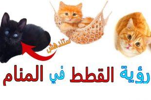 صورة ما تفسير رؤية القطط في المنام , اهم تفسيرات القطط في الحلم