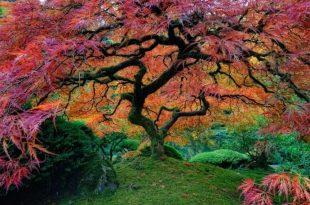 صورة اغرب شجرة في العالم , اغرب الاشياء التي ستذهلك