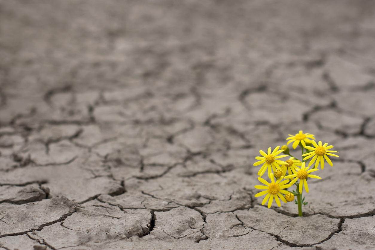 نبته زرع في ارض بور دليل على الأمل