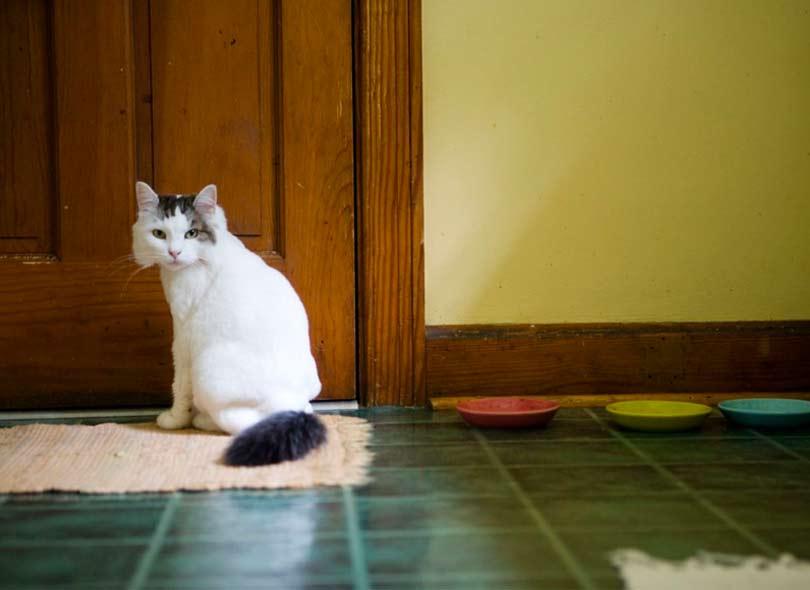 صورة كيفية منع القطط من التبرز على السلم , بطرق مبتكرة وسهلة؟