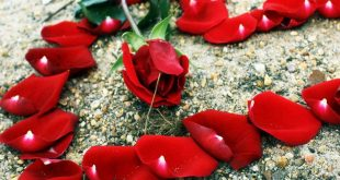 صورة اجمل واروع الصور الرومانسية , احلي كلام عن الحب والرومانسية
