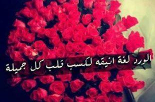 صورة كلمات جميلة عن الورد , الورد يسحر القلوب