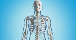 معلومات عن العظام , فوائد العظام فى الجسم