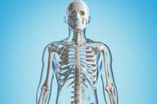 صورة معلومات عن العظام , فوائد العظام فى الجسم