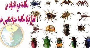 صورة شركة مكافحة حشرات بخميس مشيط , افضل شركة مكافحة للحشرات