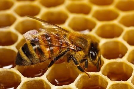 صورة ماذا يحدث اذا لدغتك نحله بالمنام , لسع النحل في المنام