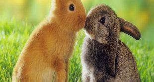 صورة دلالات لرؤية الارنب فى المنام , ارنب في الحلم