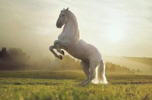 صورة الاحصنة في المنام , تفسير رؤيه الحصان فى المنام