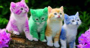 تفسير القطط في الحلم